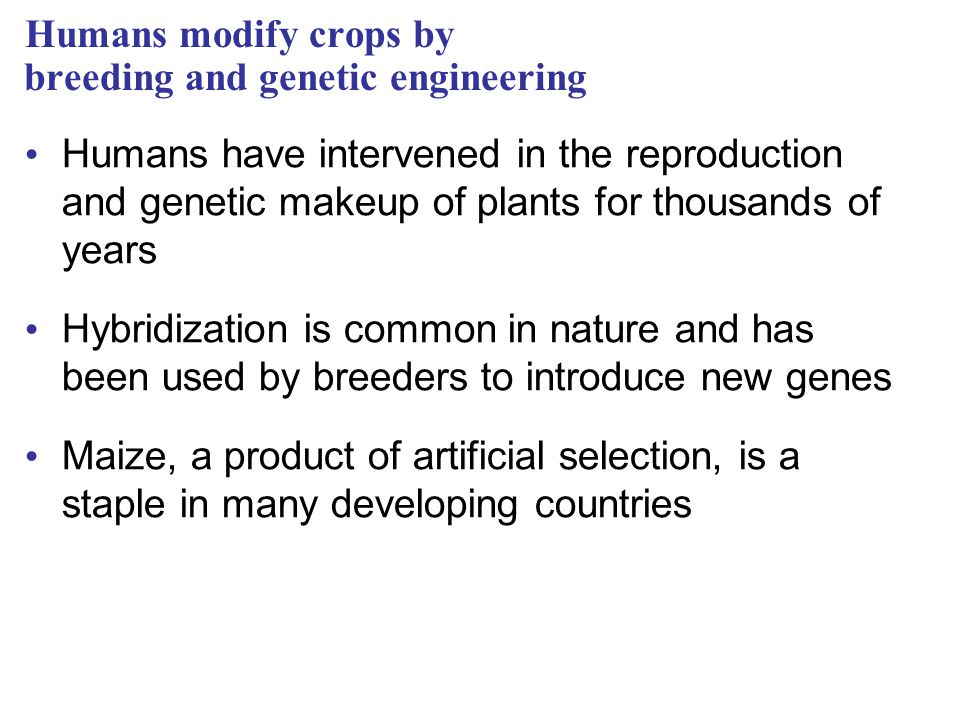 Humans modify crops by breeding and genetic engineering