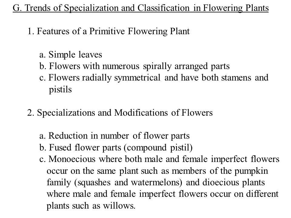 G. Trends of Specialization and Classification in Flowering Plants