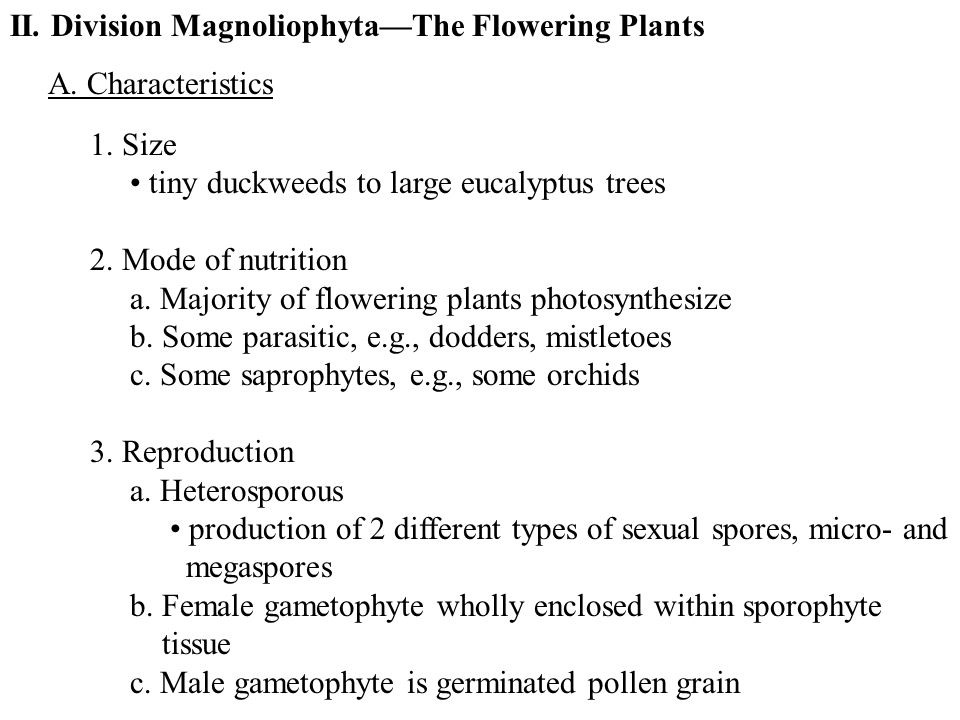 II. Division Magnoliophyta—The Flowering Plants