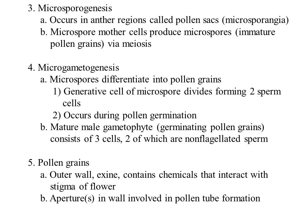 3. Microsporogenesis a. Occurs in anther regions called pollen sacs (microsporangia)