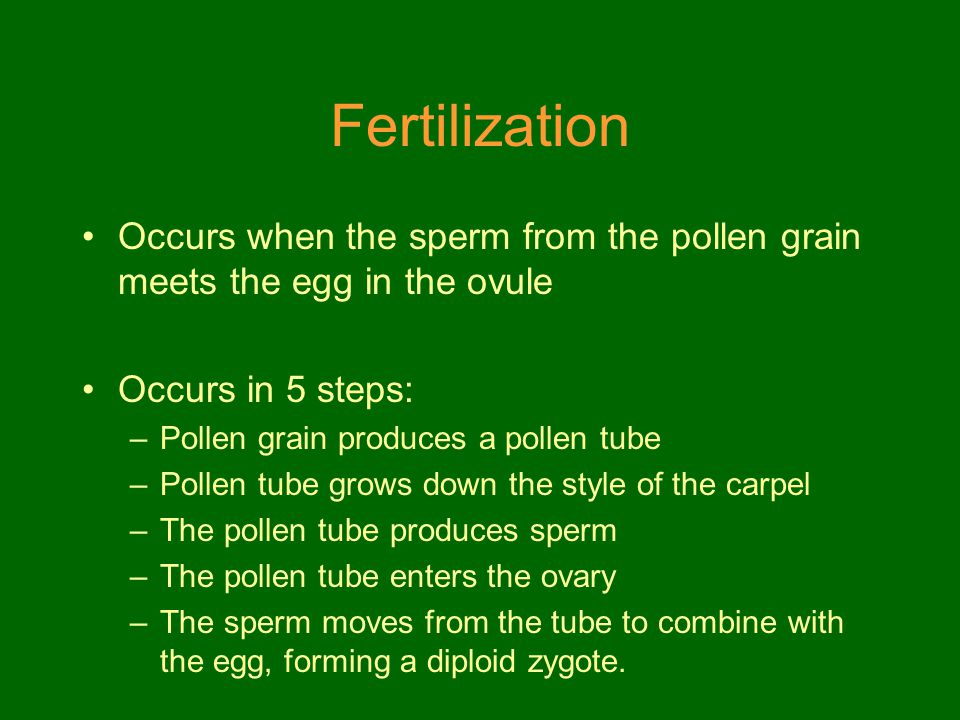 Fertilization Occurs when the sperm from the pollen grain meets the egg in the ovule. Occurs in 5 steps: