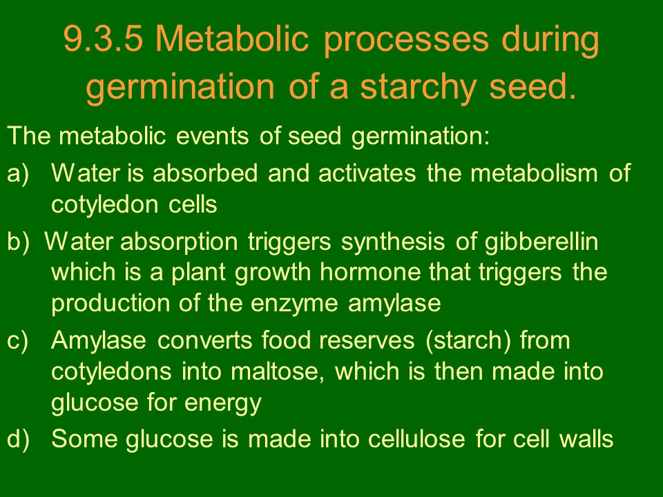 9.3.5 Metabolic processes during germination of a starchy seed.