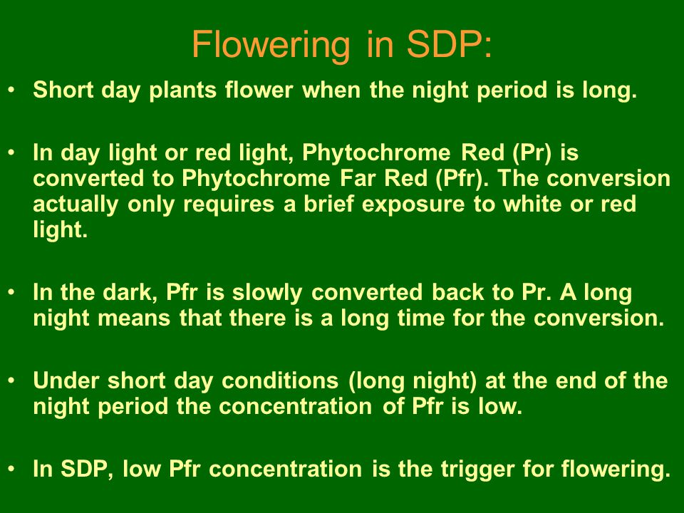 Flowering in SDP: Short day plants flower when the night period is long.