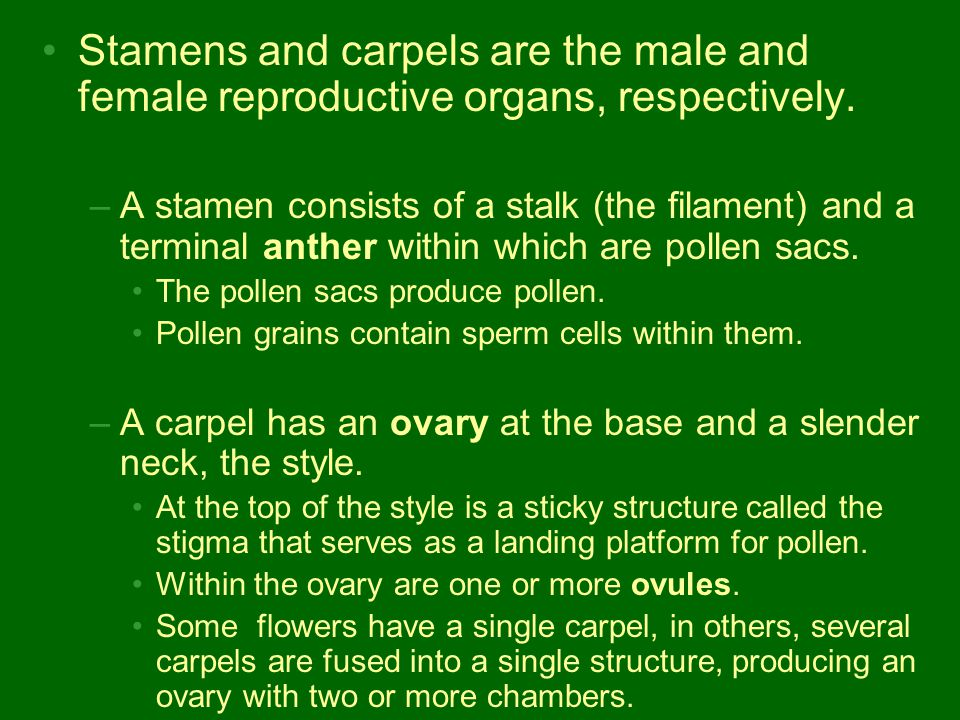 Stamens and carpels are the male and female reproductive organs, respectively.