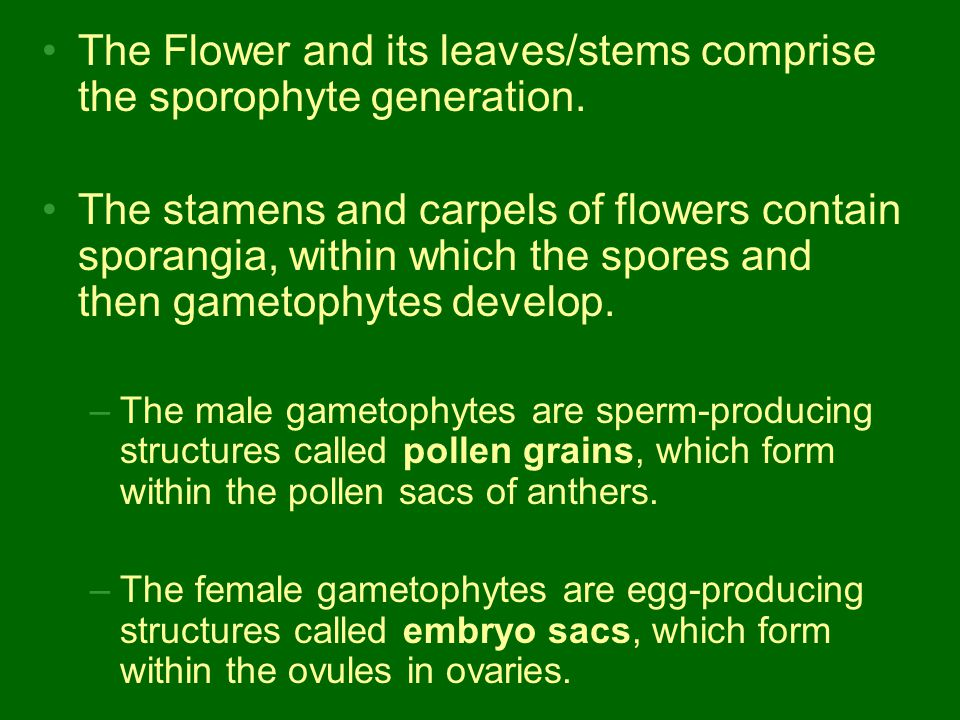 The Flower and its leaves/stems comprise the sporophyte generation.