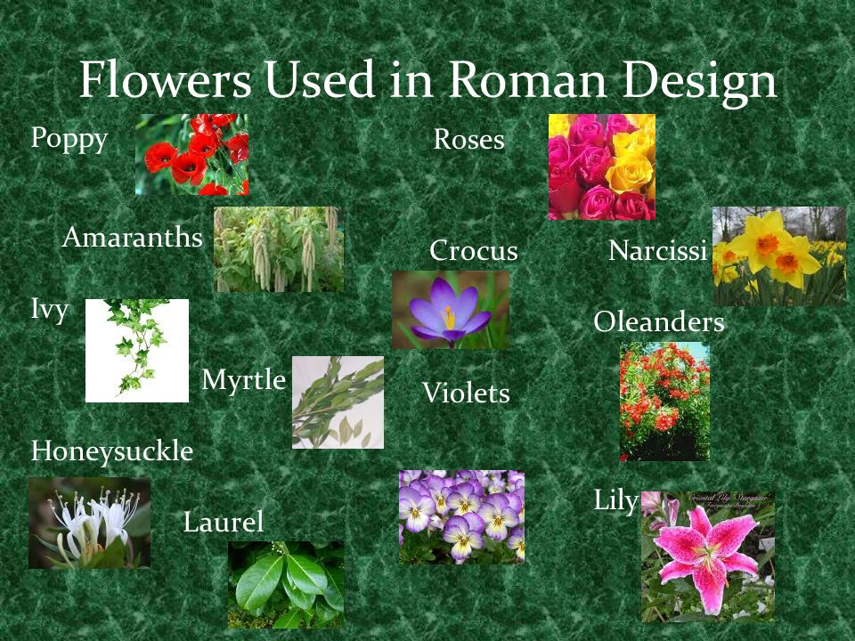 Flowers Used in Roman Design