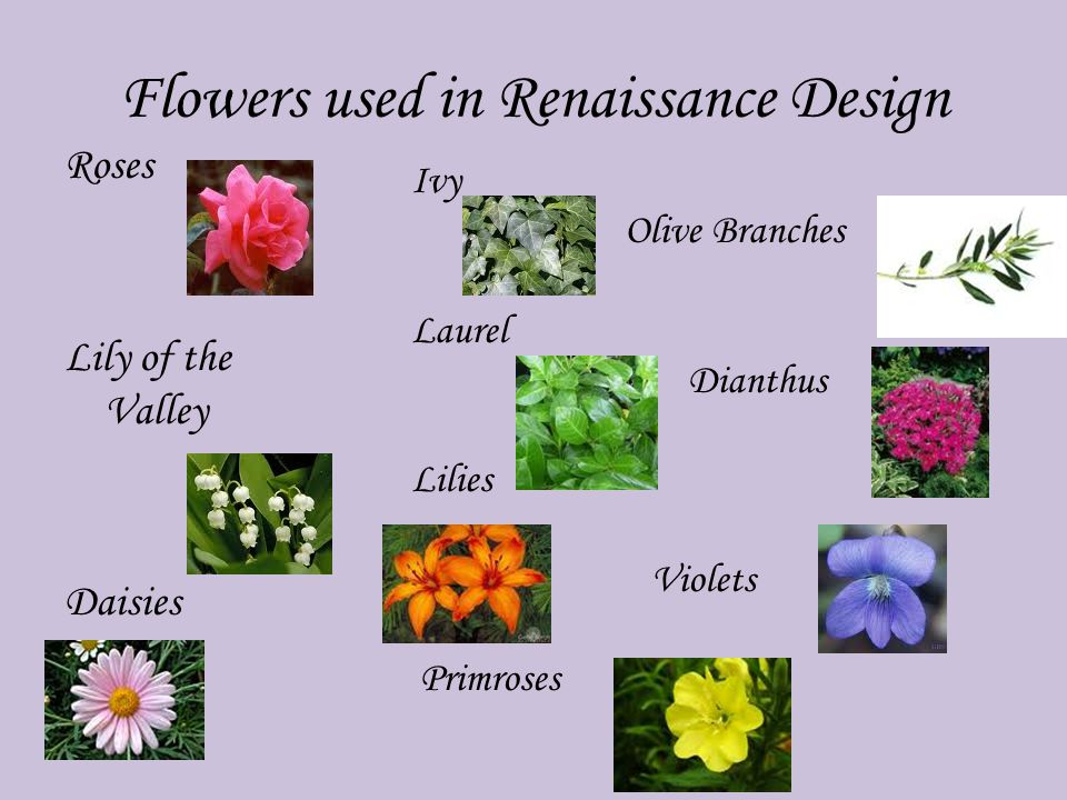 Flowers used in Renaissance Design