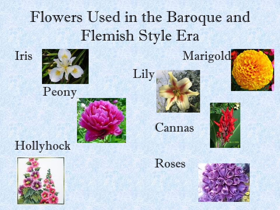Flowers Used in the Baroque and Flemish Style Era