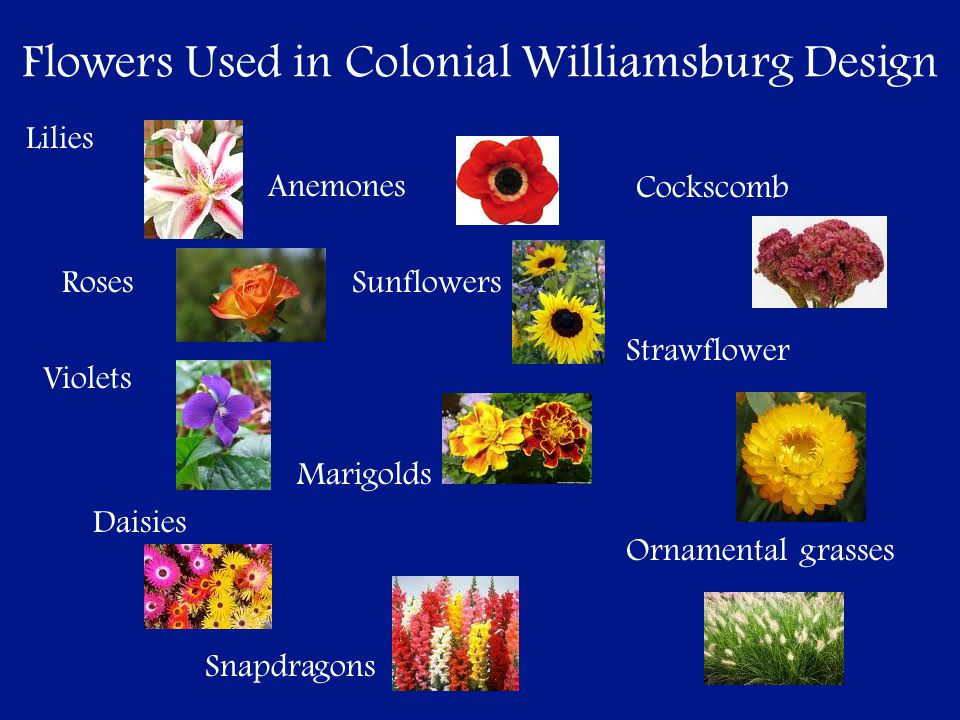 Flowers Used in Colonial Williamsburg Design