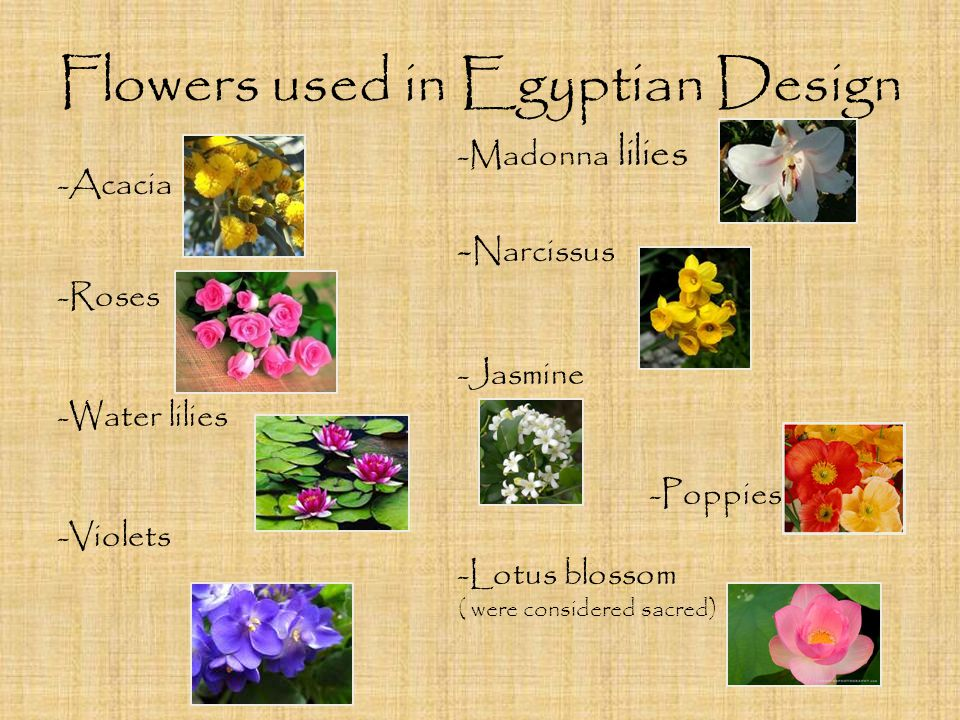 Flowers used in Egyptian Design