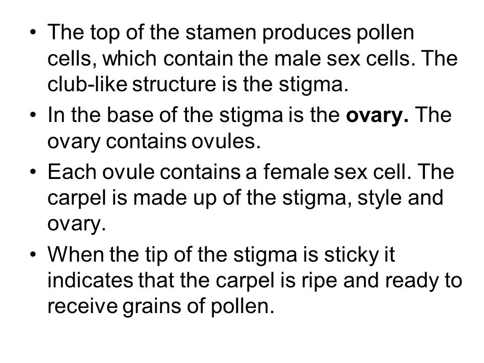 The top of the stamen produces pollen cells, which contain the male sex cells. The club-like structure is the stigma.