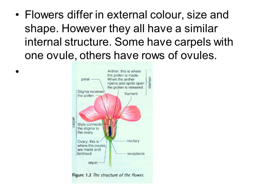 Flowers differ in external colour, size and shape