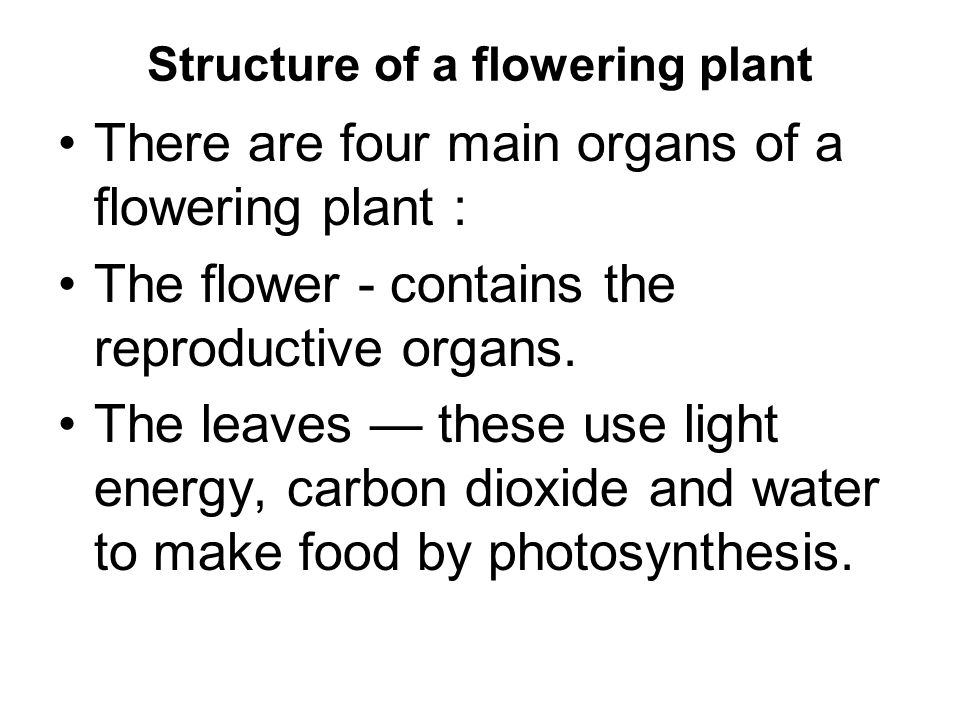 Structure of a flowering plant