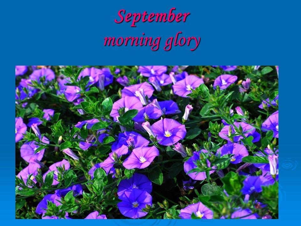September morning glory