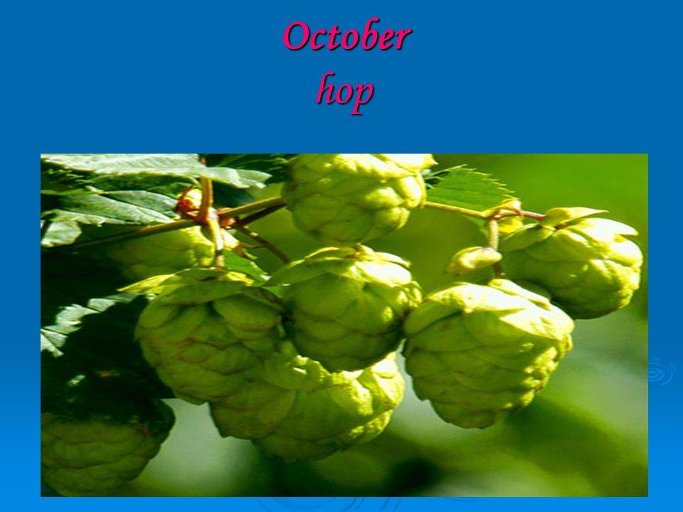 October hop