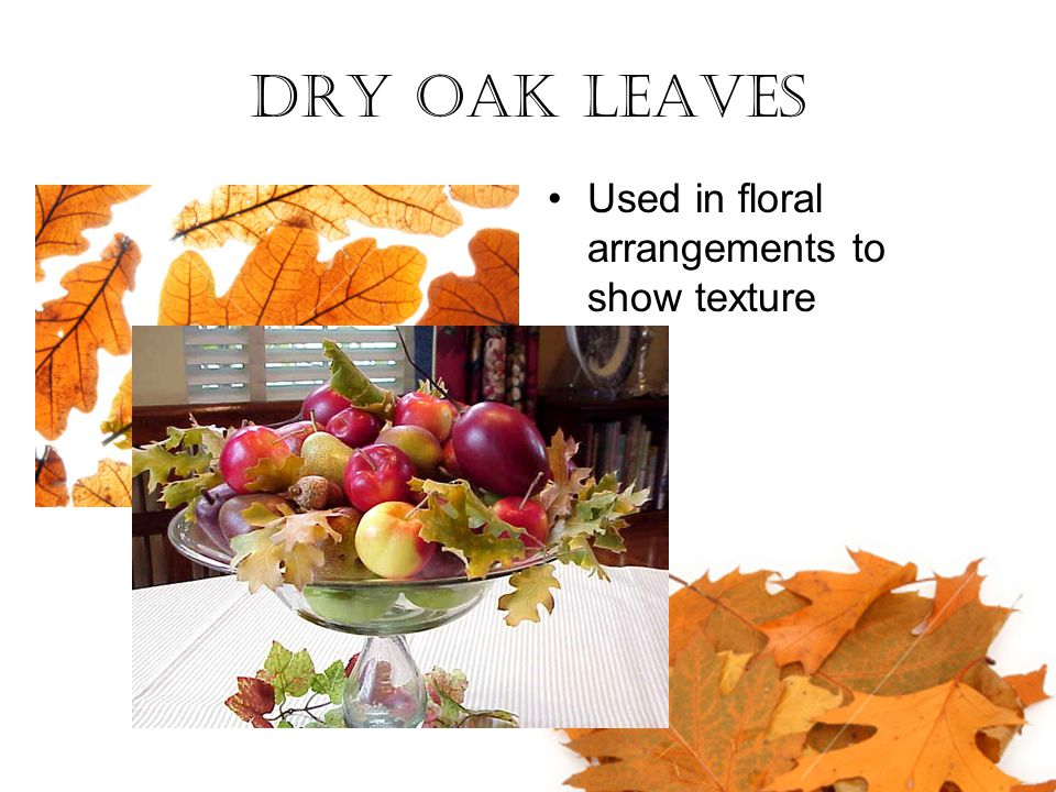 Dry Oak Leaves Used in floral arrangements to show texture