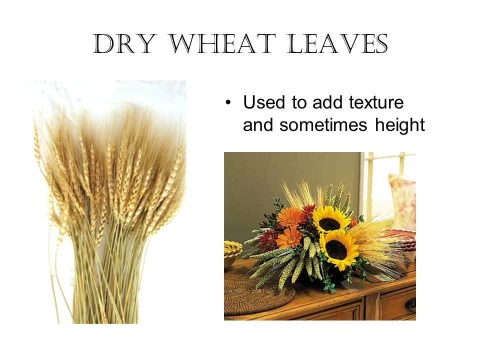 Dry Wheat Leaves Used to add texture and sometimes height