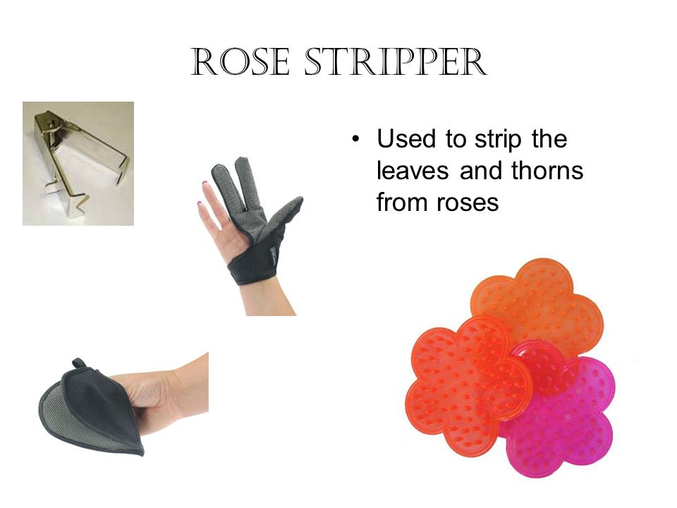 Rose stripper Used to strip the leaves and thorns from roses