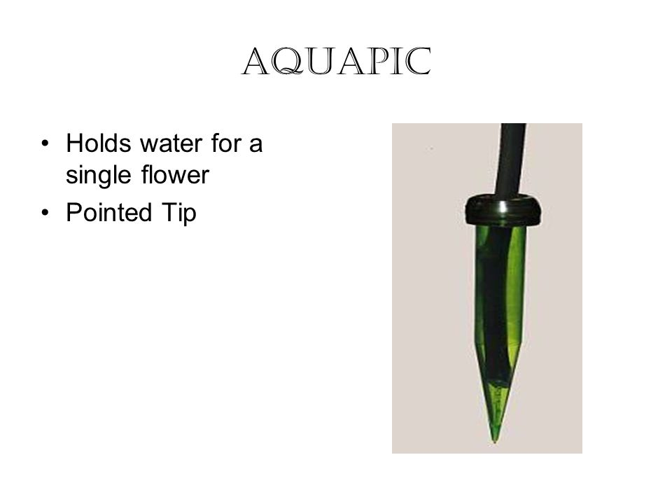 Aquapic Holds water for a single flower Pointed Tip