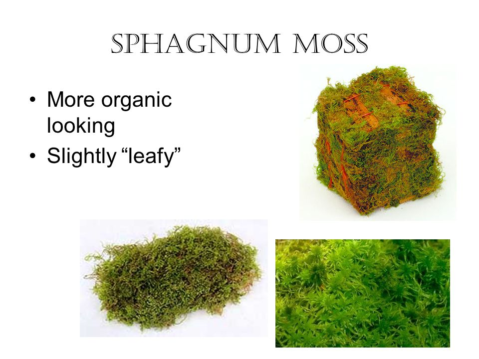 Sphagnum Moss More organic looking Slightly leafy