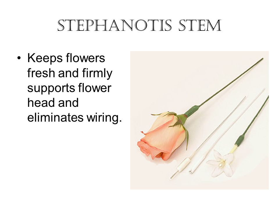 Stephanotis stem Keeps flowers fresh and firmly supports flower head and eliminates wiring.