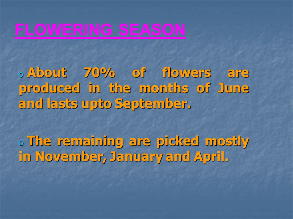 FLOWERING SEASON About 70% of flowers are produced in the months of June and lasts upto September.