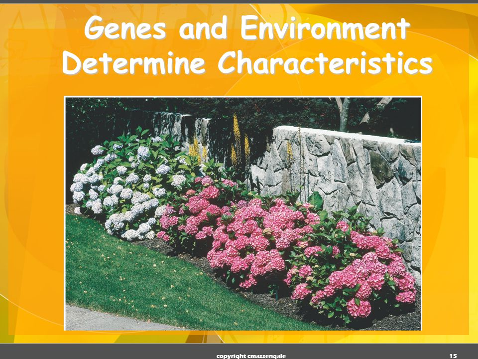 Genes and Environment Determine Characteristics