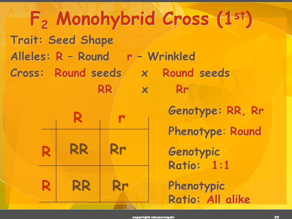 F2 Monohybrid Cross (1st)