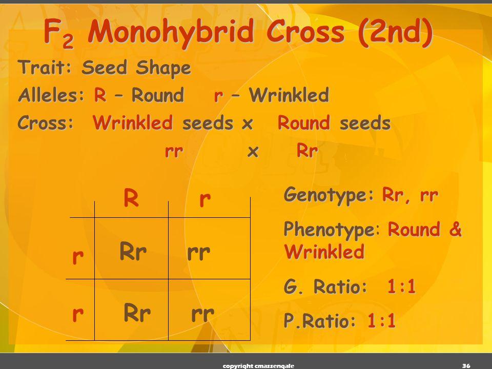 F2 Monohybrid Cross (2nd)