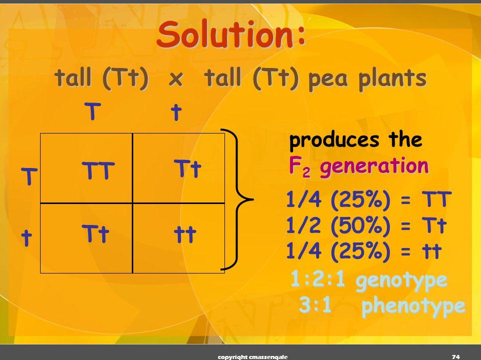 tall (Tt) x tall (Tt) pea plants