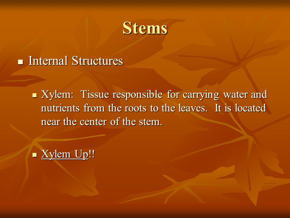 Stems Internal Structures