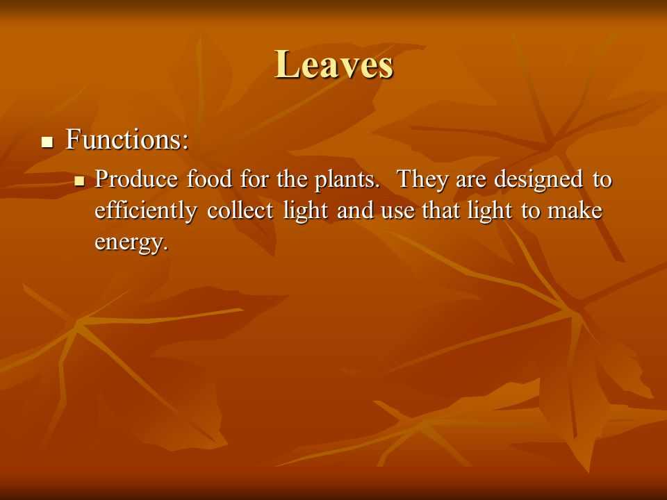 Leaves Functions: Produce food for the plants.