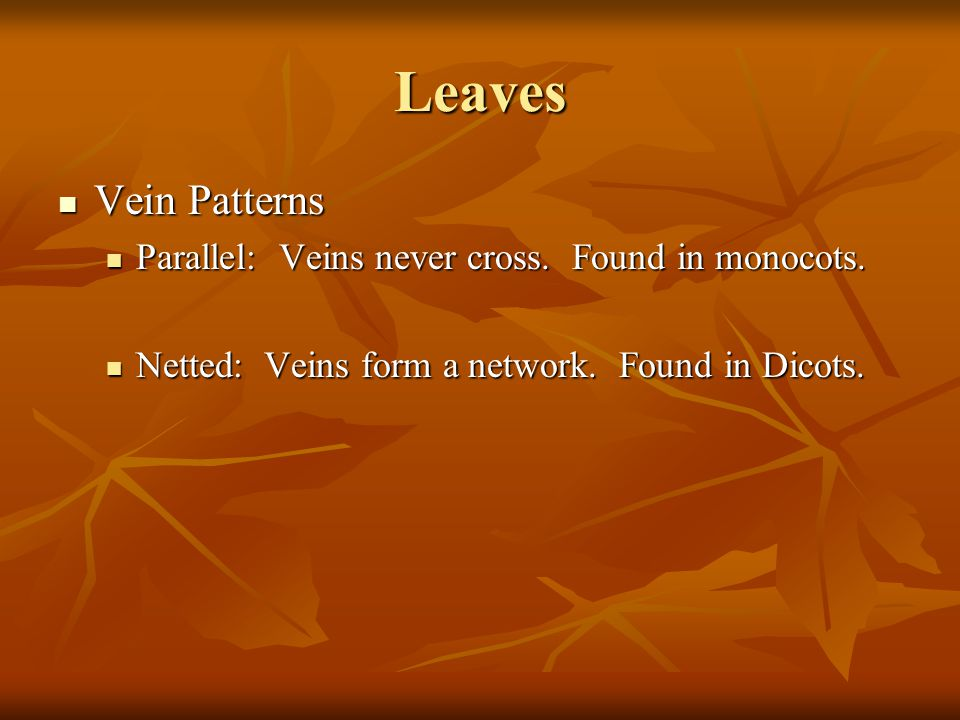 Leaves Vein Patterns Parallel: Veins never cross. Found in monocots.