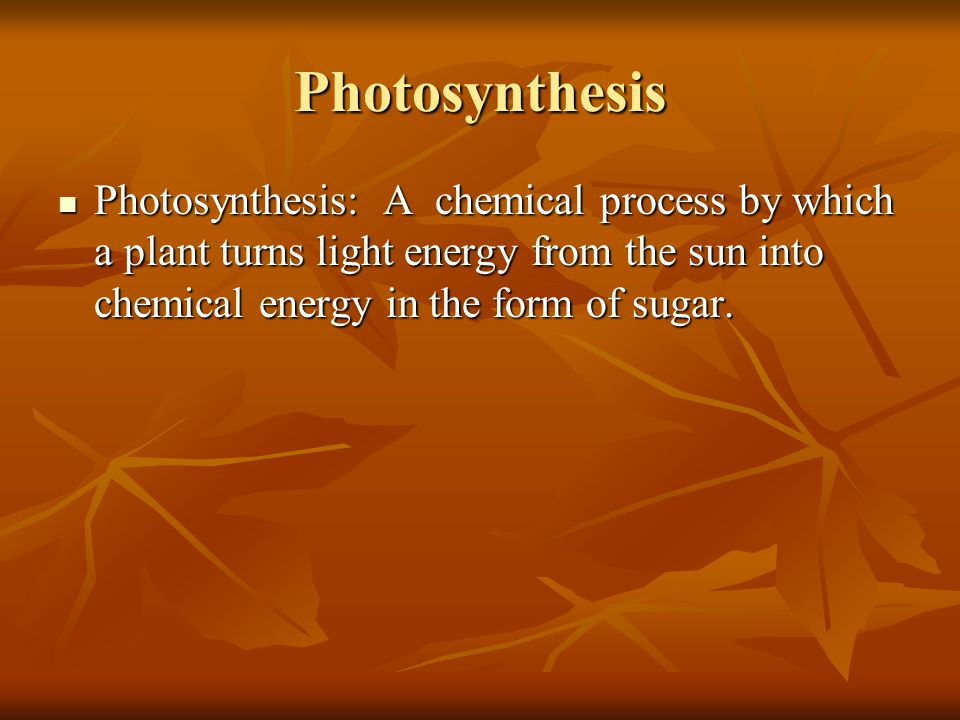 Photosynthesis Photosynthesis: A chemical process by which a plant turns light energy from the sun into chemical energy in the form of sugar.