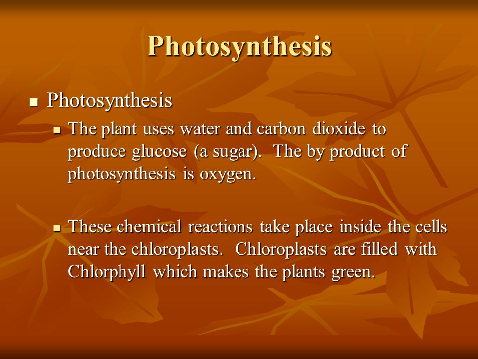 Photosynthesis Photosynthesis