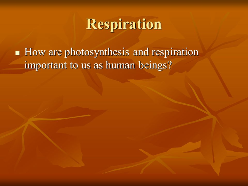 Respiration How are photosynthesis and respiration important to us as human beings