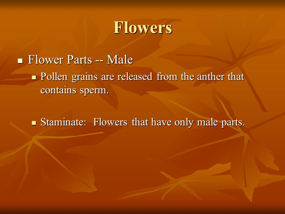Flowers Flower Parts -- Male