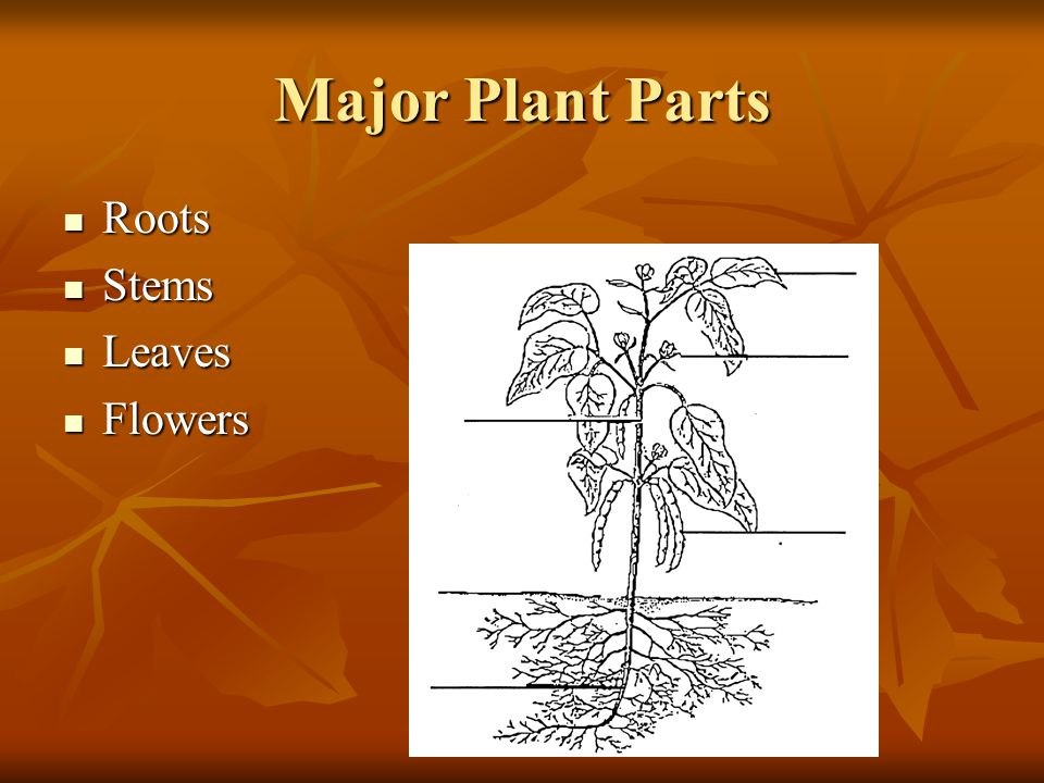 Major Plant Parts Roots Stems Leaves Flowers