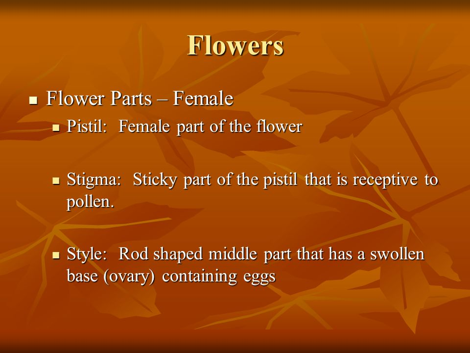 Flowers Flower Parts – Female Pistil: Female part of the flower