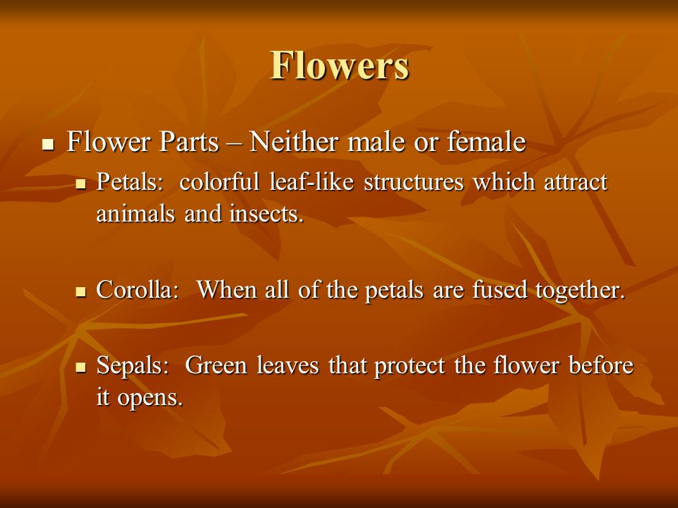 Flowers Flower Parts – Neither male or female