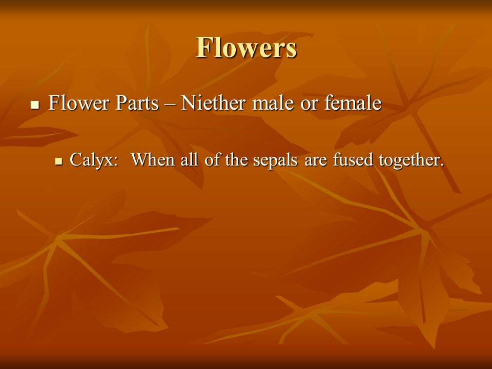 Flowers Flower Parts – Niether male or female