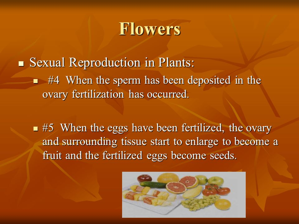 Flowers Sexual Reproduction in Plants: