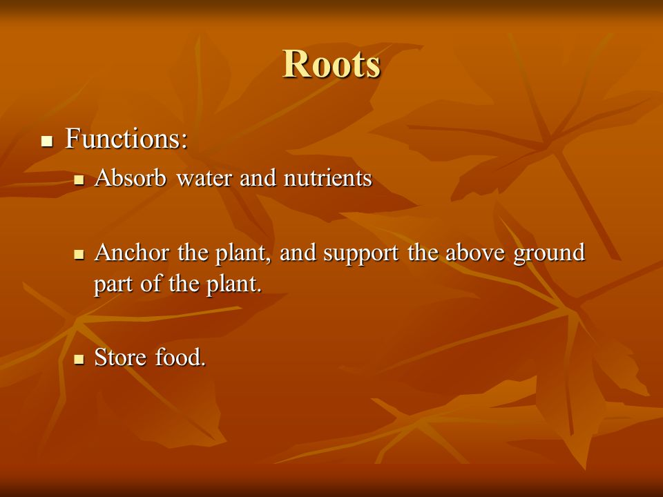 Roots Functions: Absorb water and nutrients
