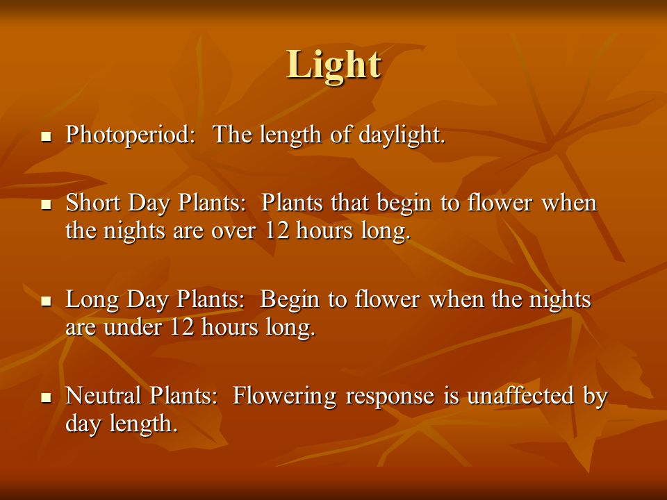 Light Photoperiod: The length of daylight.