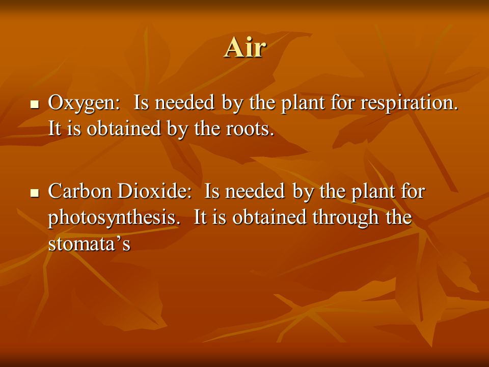 Air Oxygen: Is needed by the plant for respiration. It is obtained by the roots.
