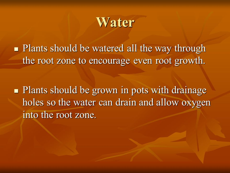 Water Plants should be watered all the way through the root zone to encourage even root growth.
