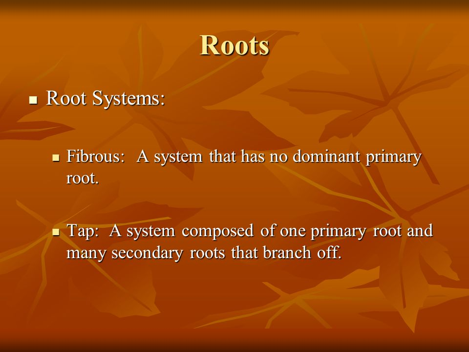Roots Root Systems: Fibrous: A system that has no dominant primary root.