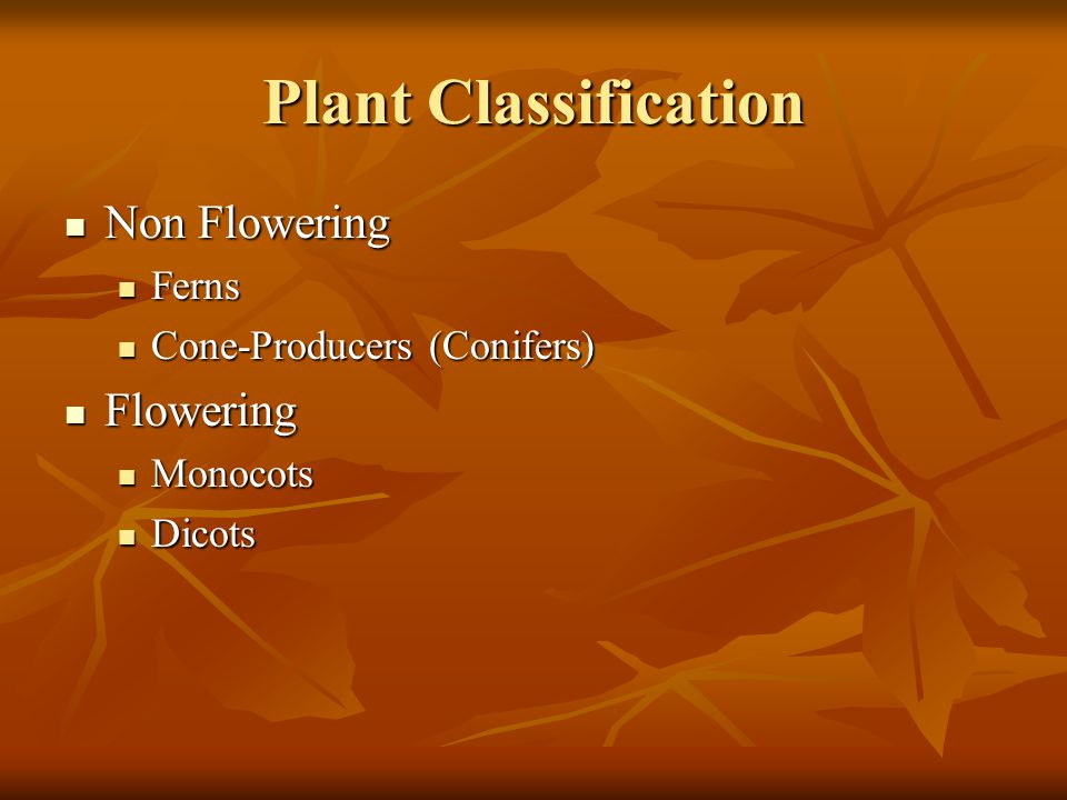 Plant Classification Non Flowering Flowering Ferns