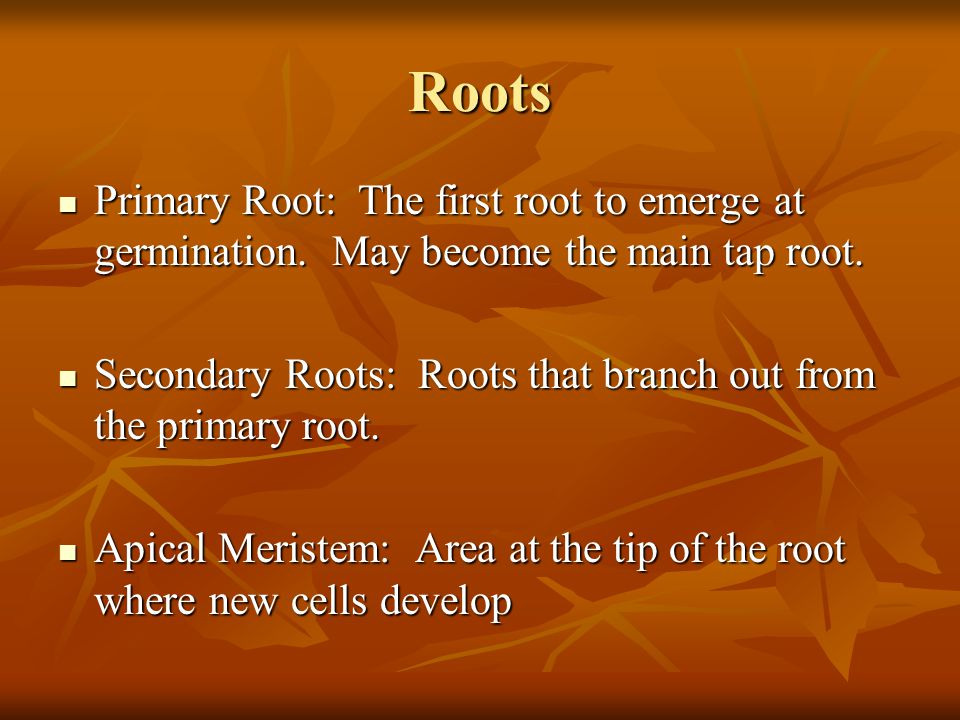 Roots Primary Root: The first root to emerge at germination. May become the main tap root.