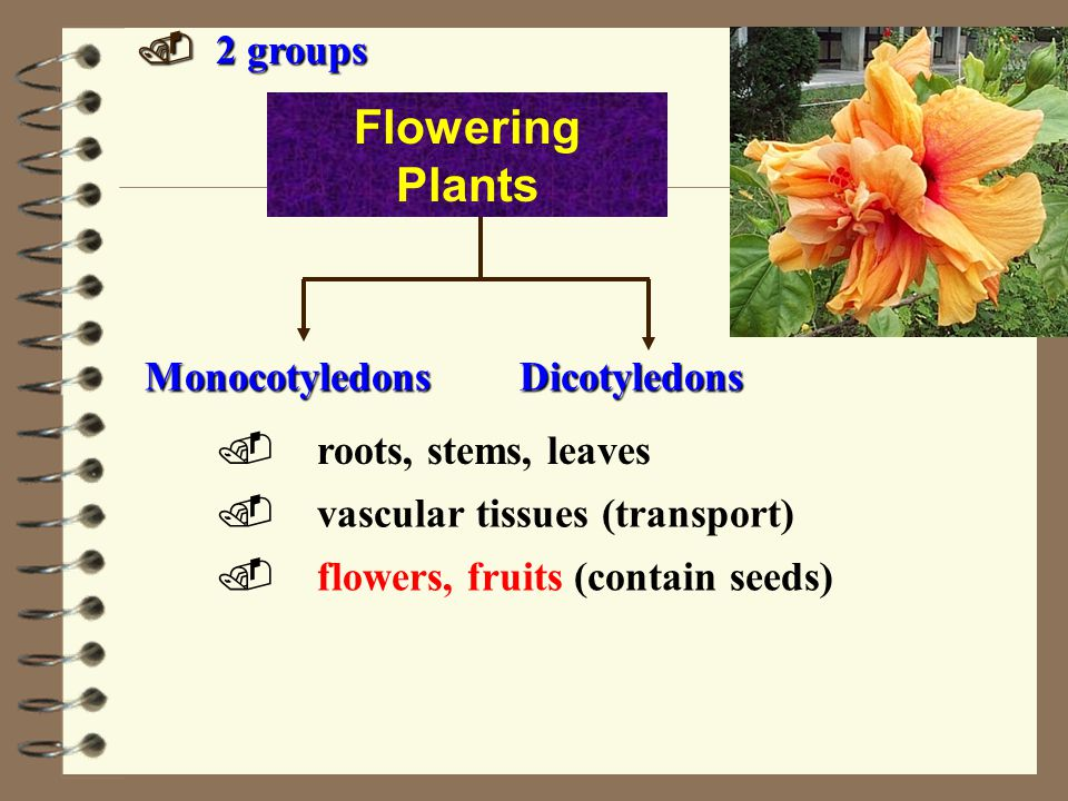 Flowering Plants . 2 groups Monocotyledons Dicotyledons